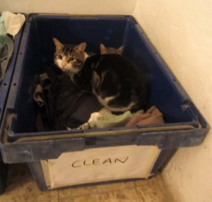 Doodoo and Oy (who are gay lovers), discovered in the clean washing