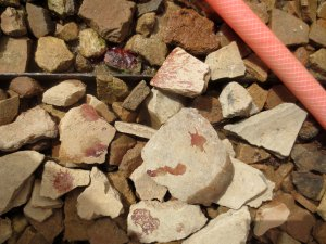 Blood in the sherd yard