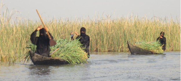 The watery world of the marsh arabs
