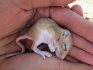 Last week's baby mice: much preferable to this week's baby snakes