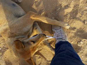The dog helps by eating my shoes