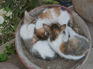 Farewell to the potted kittens of Egypt and a return to the fussy elderly cats of Cheshire
