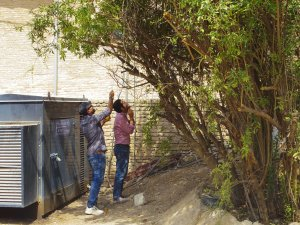 My Kurdish colleagues use a hand tape to gather pomegranates from a nearby tree in a further illustration of their extraordinary work ethic